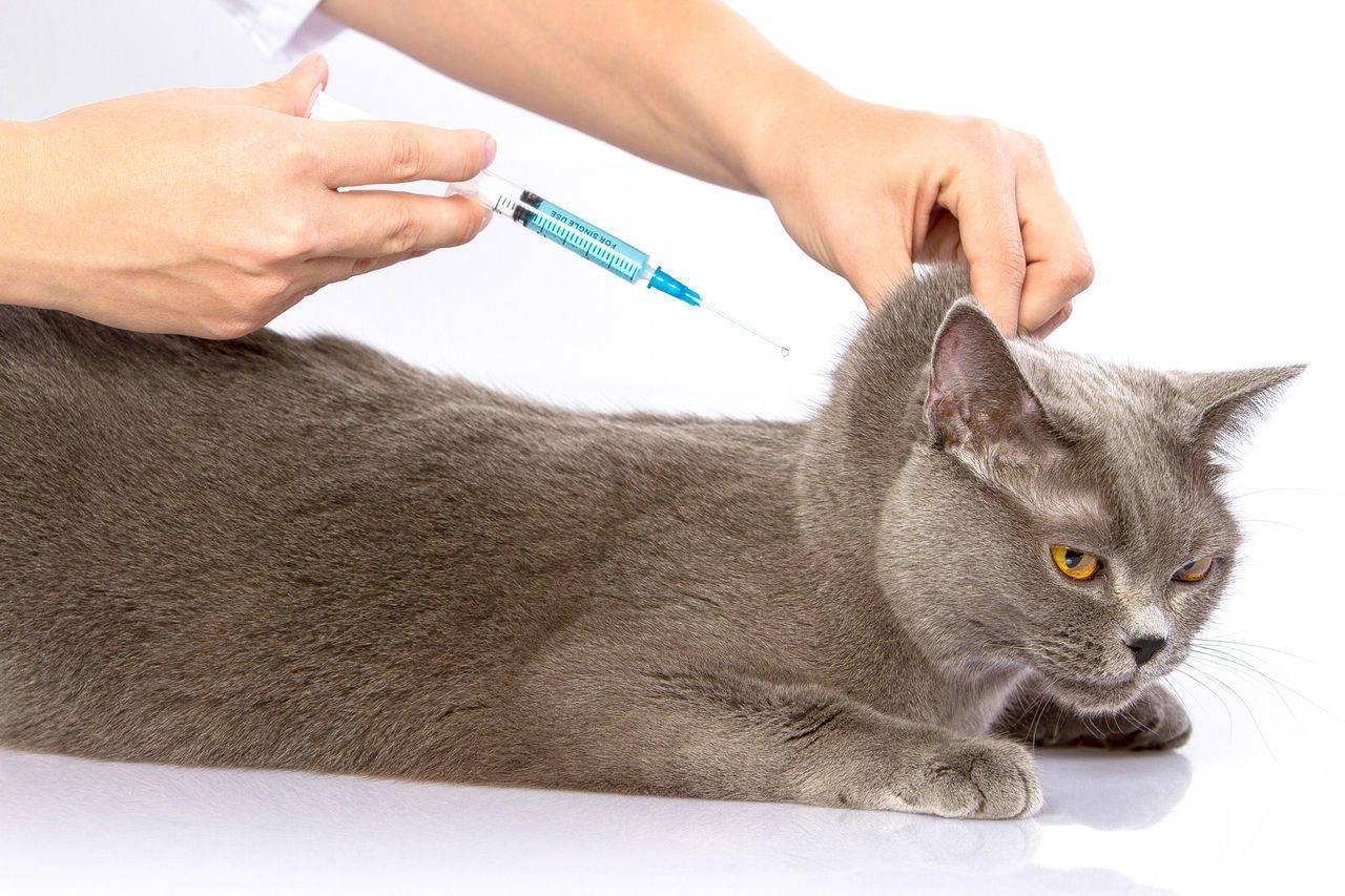 Глобфел-4 для кошек: инструкция по применению сыворотки, особенности препарата