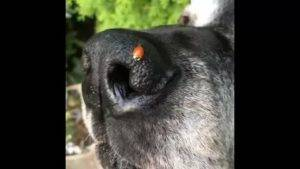 Влажный и теплый нос у собаки. горячий и сухой нос у собаки: причины. сухой или горячий, теплый нос у собаки, когда она спит во время сна что это значит и почему - новая медицина