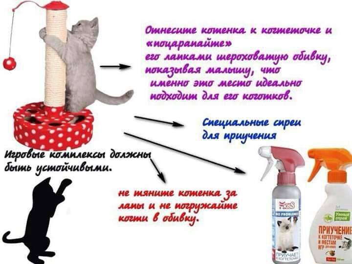 Как приучить кошку (взрослую или котенка) к когтеточке и домику