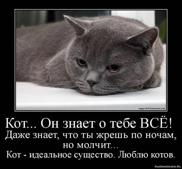 Ваша кошка ненавидит эти 9 вещей!
