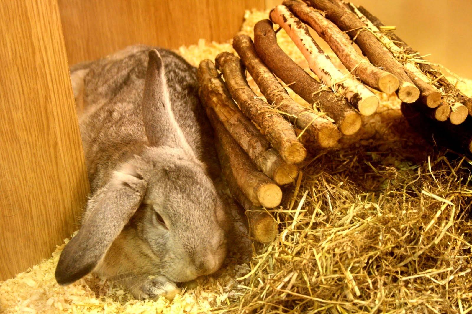 Кормление кроликов хлебом: польза и вред изделий из хлеба, правила и рекомендации по кормлению