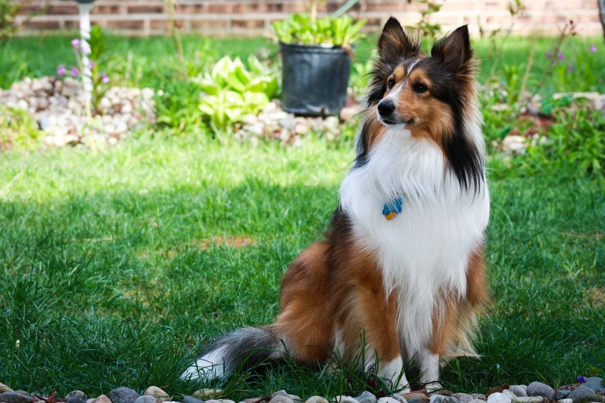 Самые умные породы собак в мире: топ-33 рейтинг собак по интеллекту