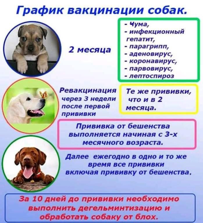 Как правильно глистогонить собаку - когда, сколько, как часто?