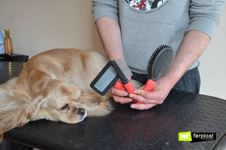 Собака сильно линяет — самые распространенные причины отклонения