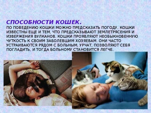 Особенности поведения кошек.