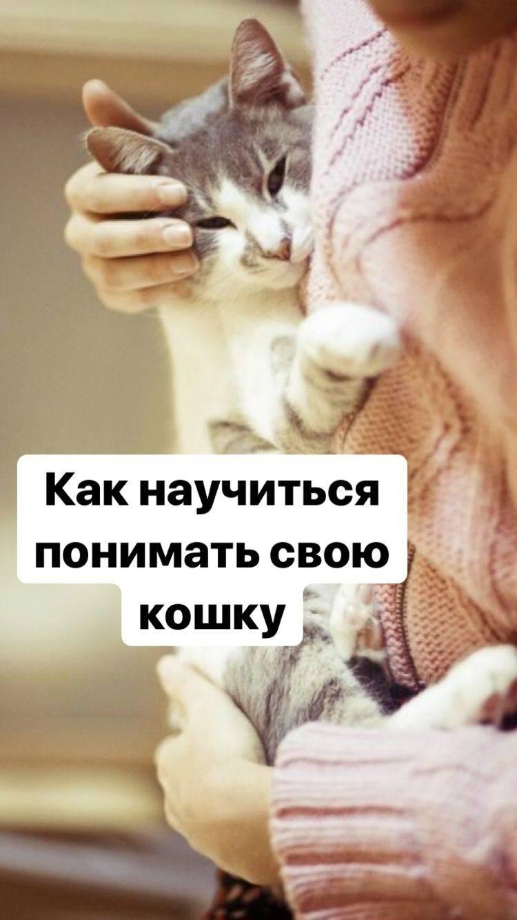 Воспитанный кот: как поощрять кота за хорошее поведение