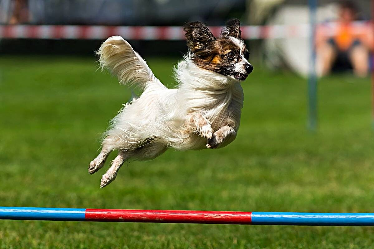 Маленькие породы собак с названиями, размером и фото   petguru