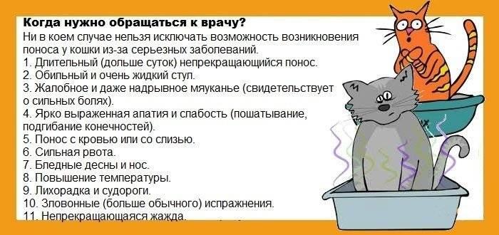 Почему кошка блюет после сухого корма