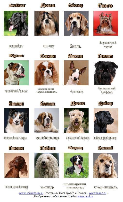 Собаки средних пород: список с фотографиями и описаниями