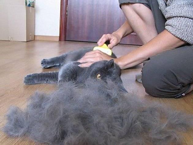 Кот наелся шерсти симптомы и лечение - муркин дом