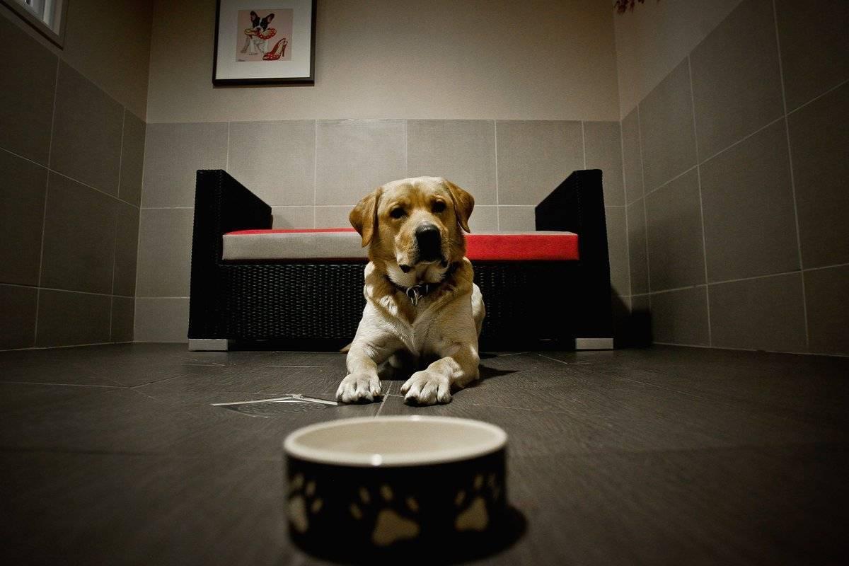 Лучшие зоогостиницы москвы для собак