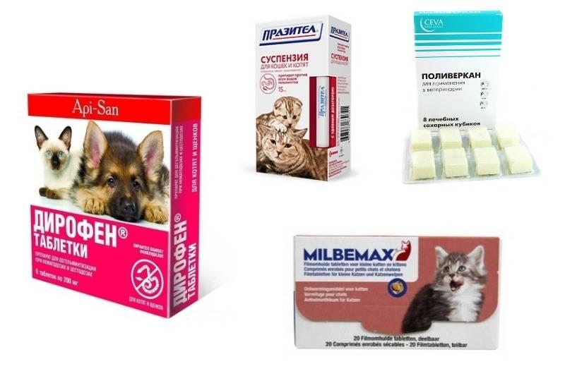 Как и чем правильно лечить понос у кота в домашних условиях?