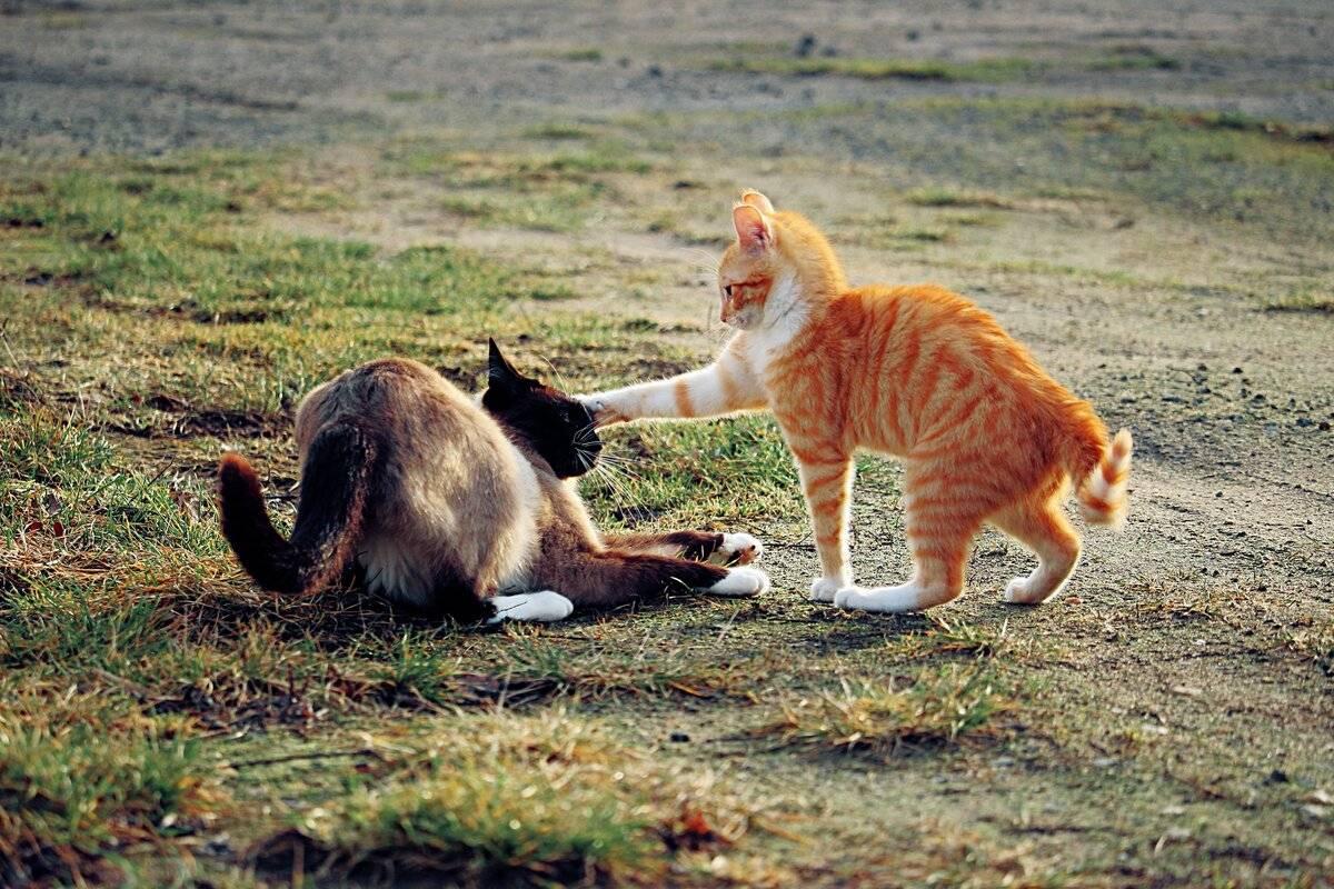 Настроения кошек и их позы - zefirka