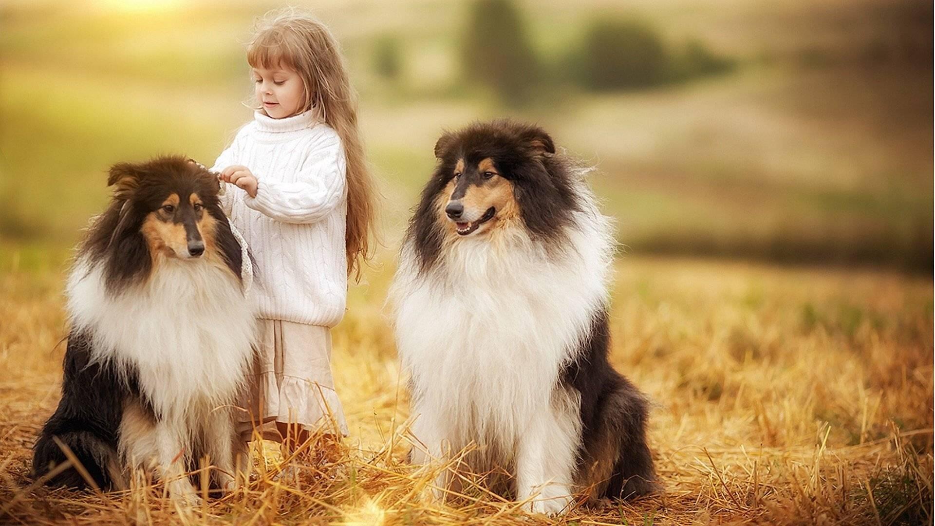 Самые добрые породы собак в мире: топ лучших