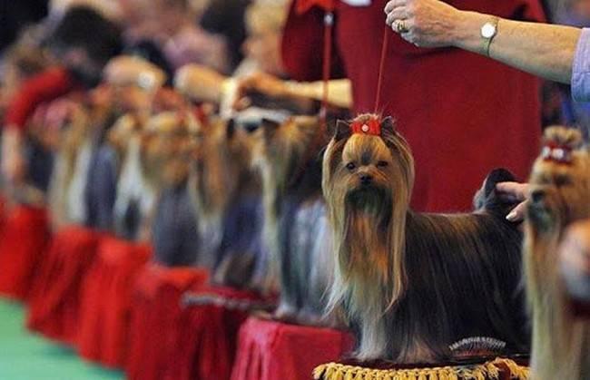 Редкие породы собак (67 фото): описание самых необычных маленьких и больших пород в россии и в мире