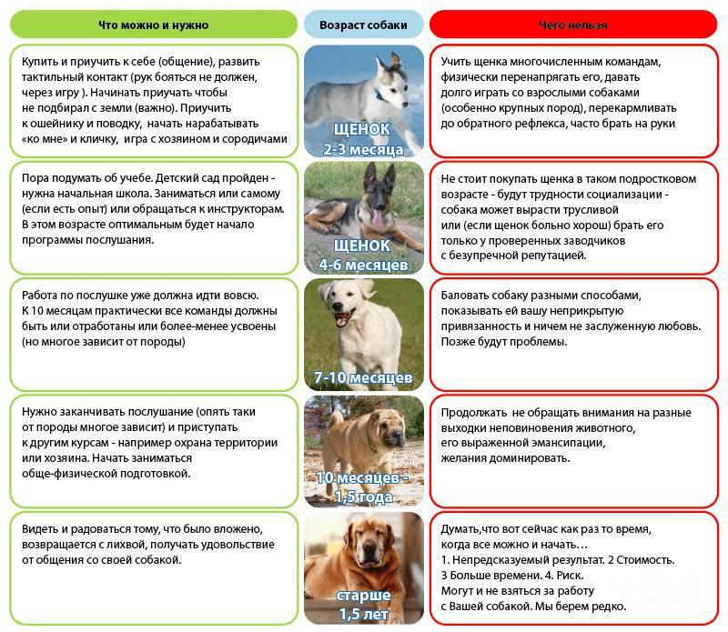 Что такое алиментный щенок