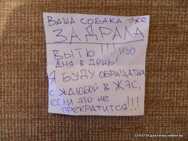 У соседей по даче злая собака – 7 способов решения проблемы   полезно (огород.ru)
