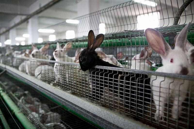 Выгодно ли разводить кроликов: все за и против