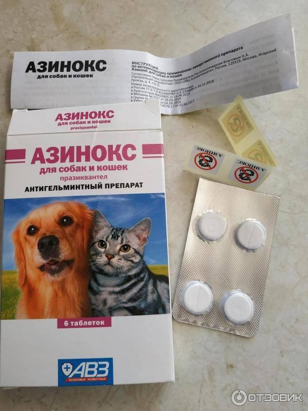 Азинокс: инструкция по применению для кошек