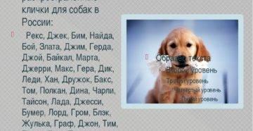 Клички для больших собак, красивые имена для собак крупных пород мальчиков и девочек.