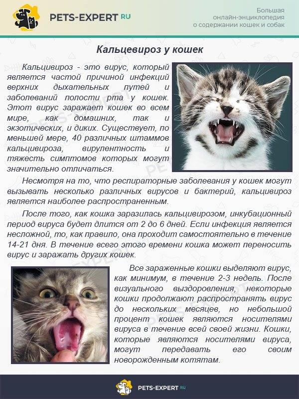 Спид кошек (распространение, этиология, эпизоотология, диагностика, патогенез, сипмтомы и принаки, тестирование, анализы, лечение  и профилактика). болеют ли кошки синдромом приобретенного иммунодефицита?