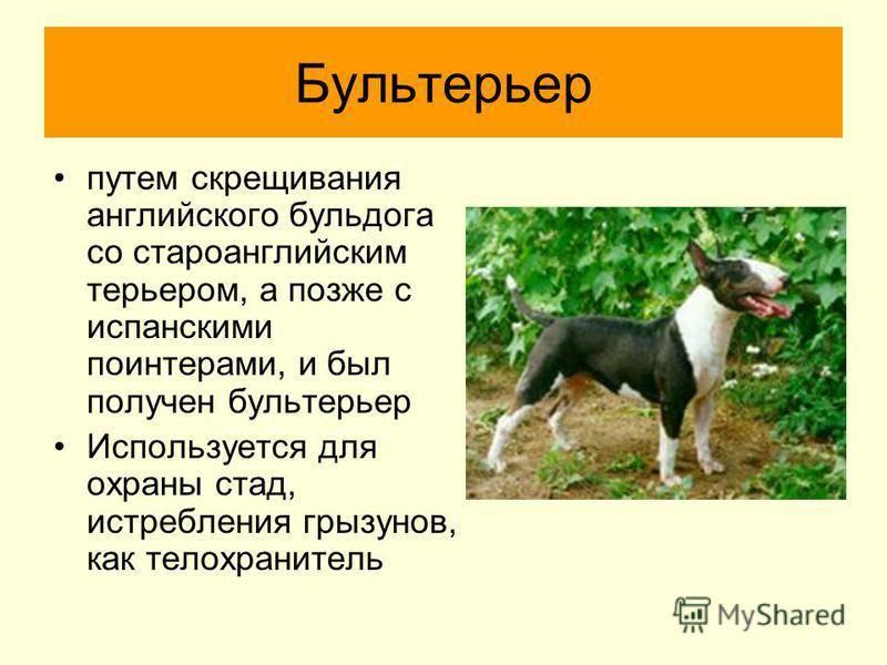 Инбридинг у собак инбридинг у собак