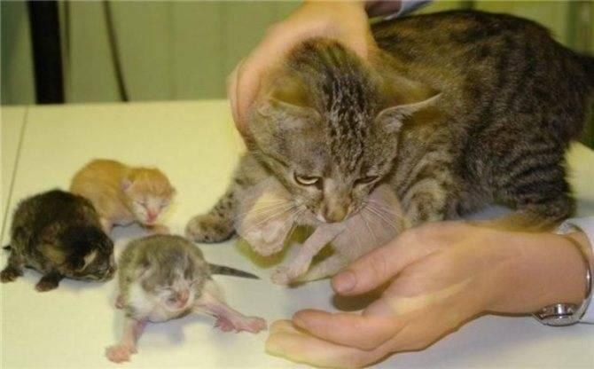 Как часто нужно глистогонить домашнюю кошку: советы и мнение ветеринаров
