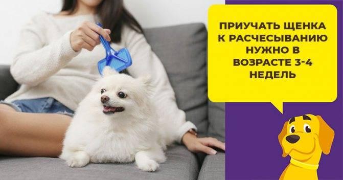 В каком возрасте можно отдавать щенков