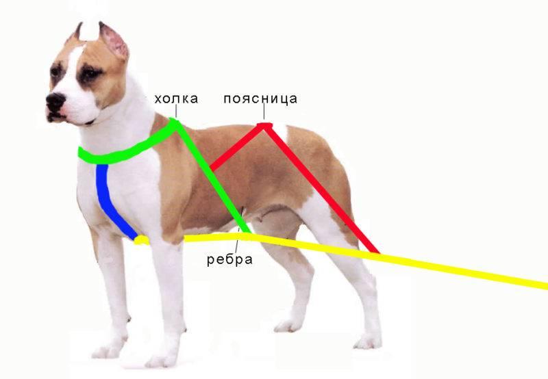 Шлейка для собак: виды, как правильно подобрать и надеть