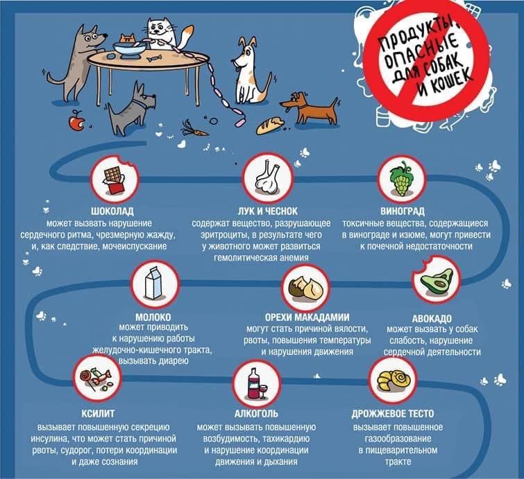 Можно ли давать собаке мясо свинины: за и против