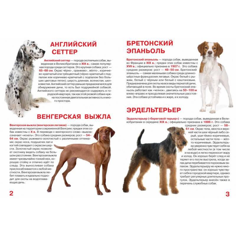 Краткий обзор пород собак средних размеров, описание с фотографиями и названиями этих пород