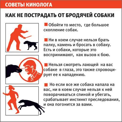 Что делать при нападении собак: совет опытного кинолога