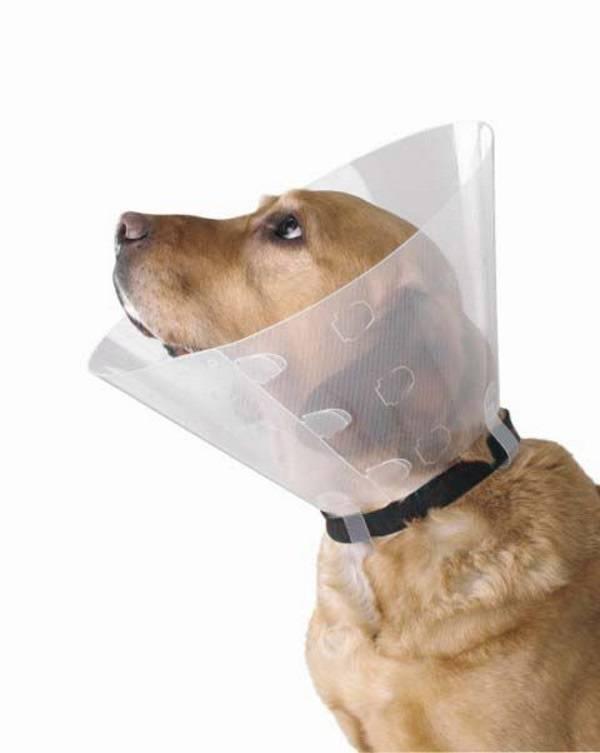 Воротник для собаки после операции своими руками