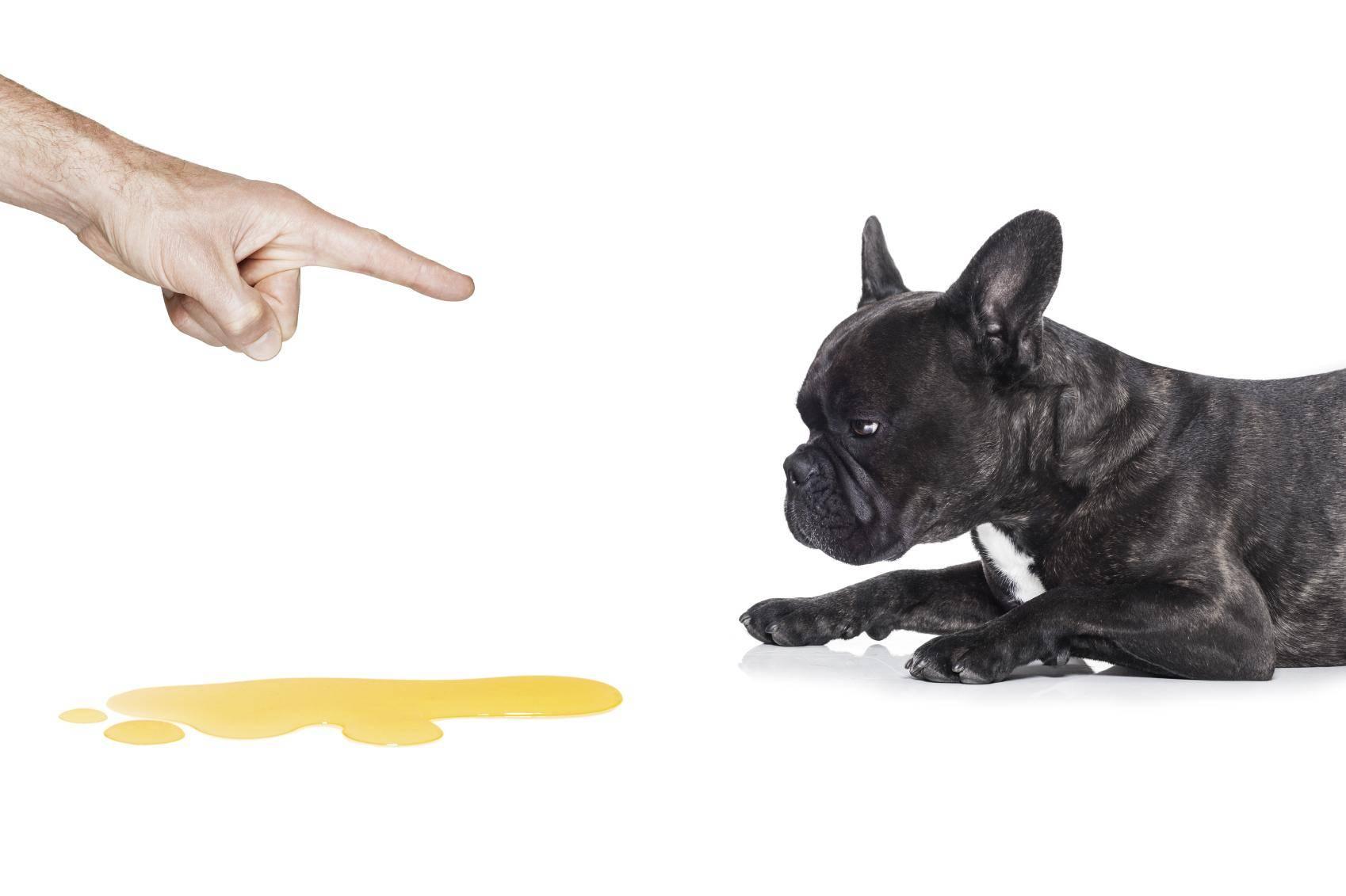 «тыкать щенка носом в его лужи — самый вредный совет»: интервью со специалистами по поведению собак - лайфхакер