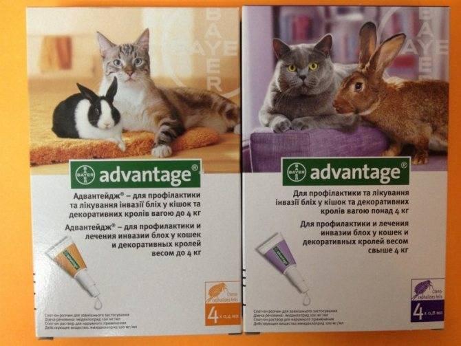 Капли от блох для кошек и котят: эффективность и инструкция по применению