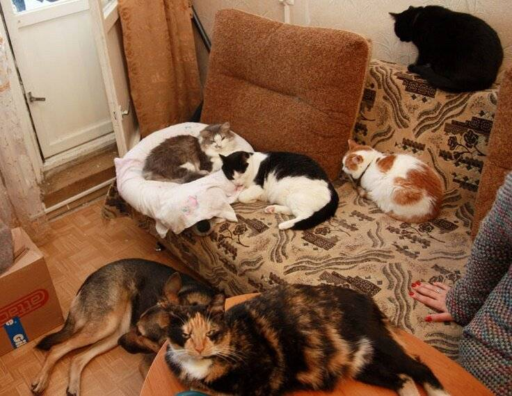 Как подружить собаку с кошкой в квартире: советы и рекомендации