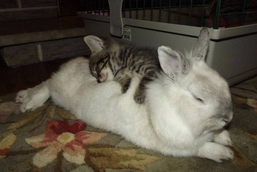 Как спят кролики