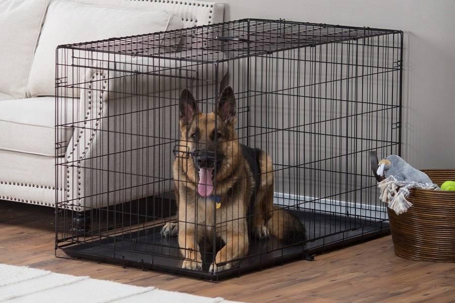 Клетка для собаки: советы по выбору и приучению