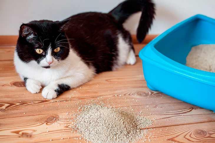 Понос у кошек: причины, лечение в домашних условиях