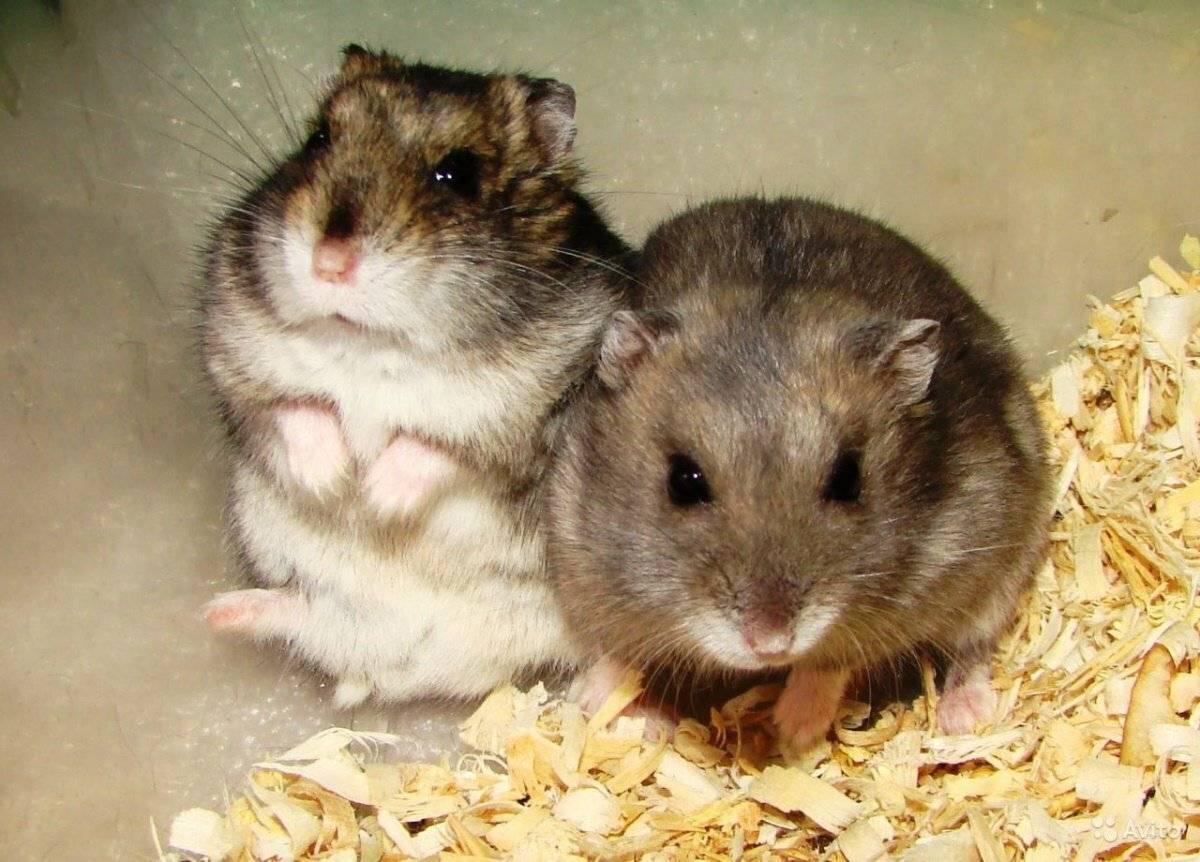 Как назвать мышку: имя для мышки-девочки, клички для мышей-мальчиков