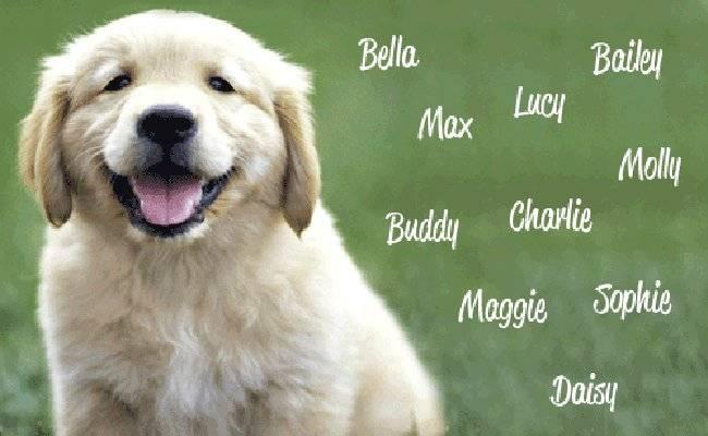 Как красиво назвать собаку-мальчика