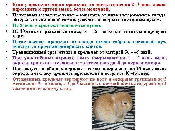 Cколько длится беременность у кроликов?