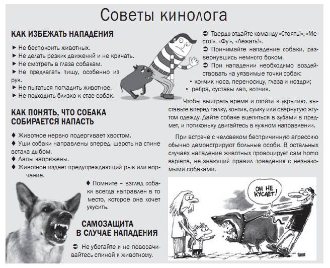 Как искать пропавшую собаку: что делать, если пес убежал