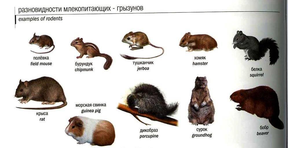 Чем отличается кролик от зайца: от разницы в местах обитания до отличий в размножении