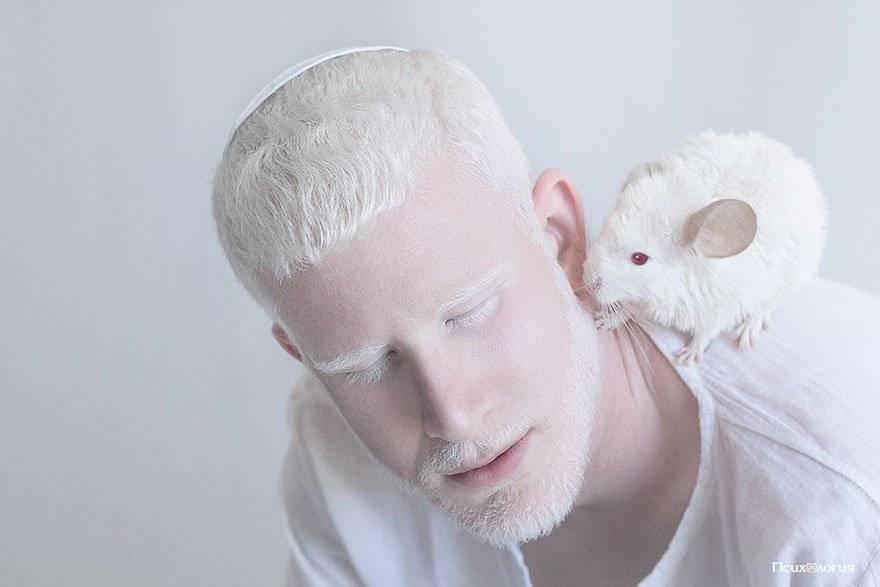 Разница между собаками-альбиносами и белыми собаками