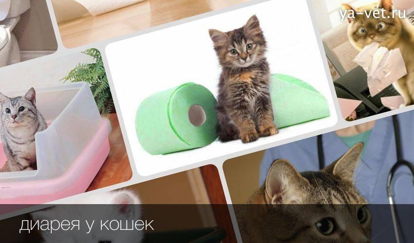 Понос у котенка: полный список возможных причин, лечение, питание, профилактика