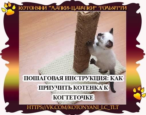 Как приучить котенка и взрослую кошку к когтеточке