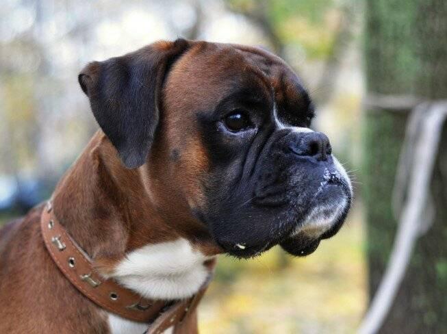 Давайте жить дружно: породы собак, которые ладят с кошками