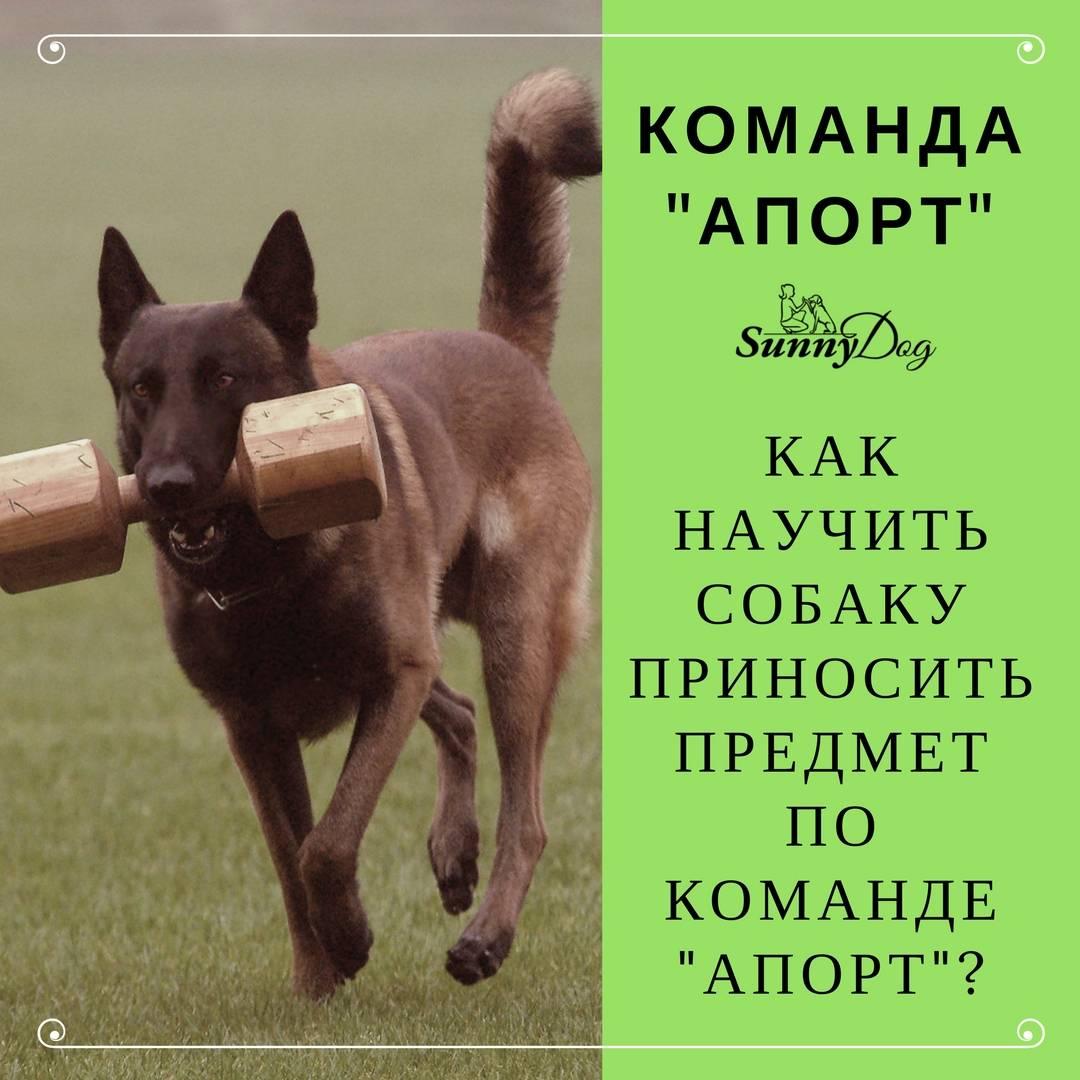 Как научить собаку команде сидеть - советы по дрессировке. видео: как приучить щенка или взрослую собаку сидеть - dogtricks.ru