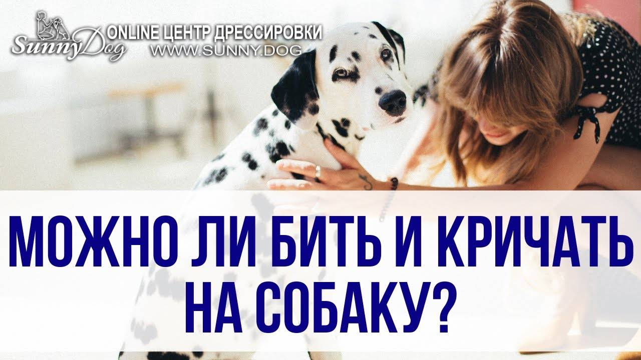 Как наказывать собаку? как правильно наказать щенка за непослушание? можно ли бить его в целях воспитания? наказание собак едой